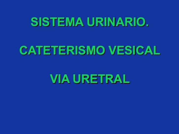 SISTEMA URINARIO. CATETERISMO VESICAL VIA URETRAL