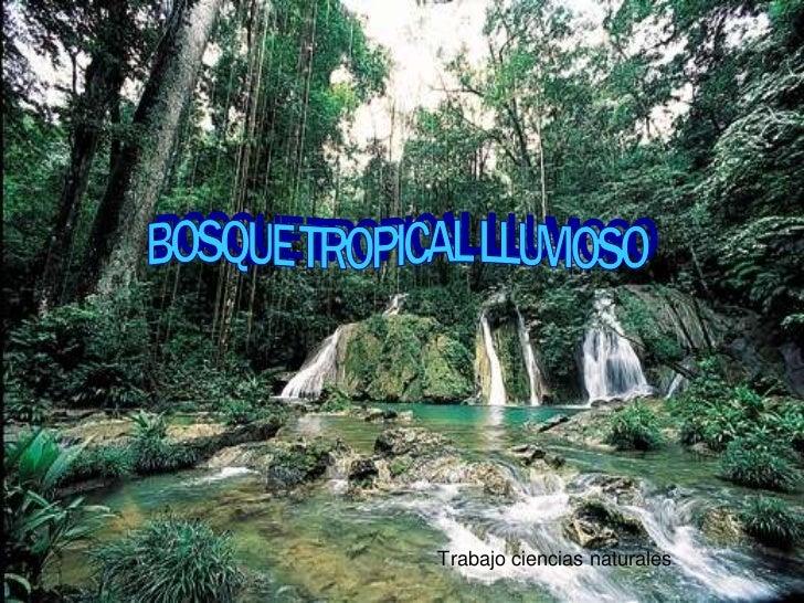 .<br />BOSQUE TROPICAL LLUVIOSO<br />Trabajo ciencias naturales<br />