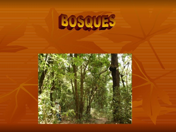 Biomas: Bosque