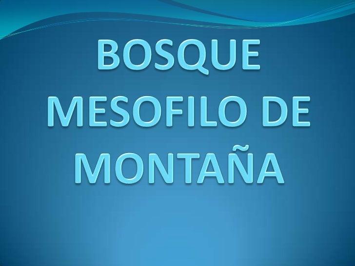 BOSQUE MESOFILO DE MONTAÑA<br />