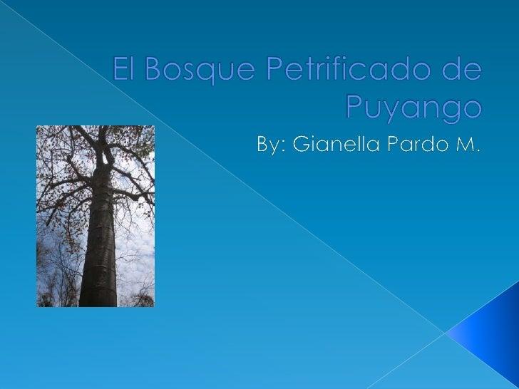 El Bosque Petrificado de Puyango<br />By: Gianella Pardo M.<br />