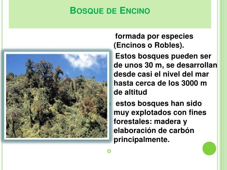 Bosques for Tipos de arboles y caracteristicas