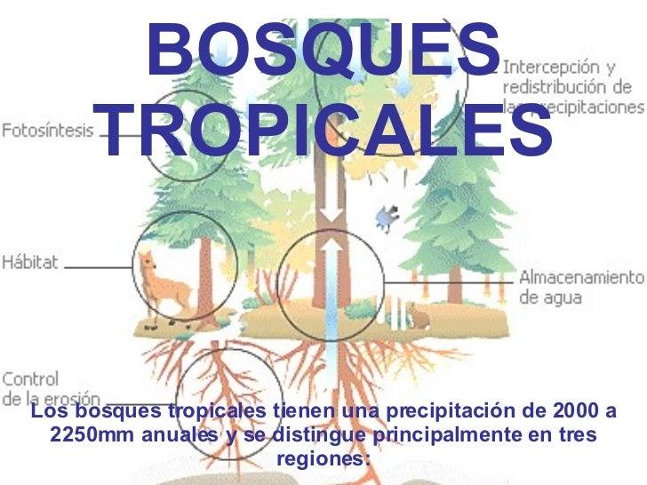 BOSQUES TROPICALES Los bosques tropicales tienen una precipitación de 2000 a 2250mm anuales y se distingue principalmente ...