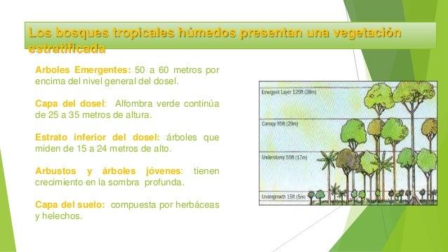 Atractivo Capas De La Selva Para Colorear Ideas - Ideas Para ...