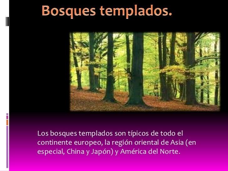 Los bosques templados son típicos de todo elcontinente europeo, la región oriental de Asia (enespecial, China y Japón) y A...