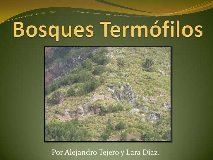 Bosques Termófilos<br />Por Alejandro Tejero y Lara Díaz.<br />