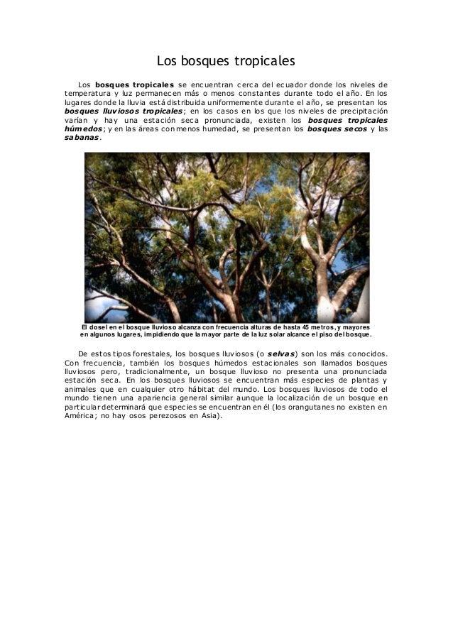 Los bosques tropicales Los bosques tropicales se encuentran cerca del ecuador donde los niveles de temperatura y luz perma...