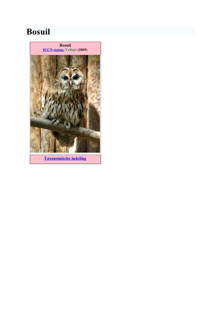 Bosuil               Bosuil     IUCN-status: Veilig[1] (2009)         Taxonomische indeling