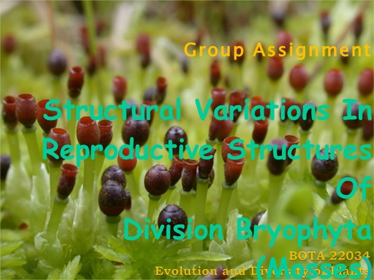 Group Assignment Structural Variations In Reproductive Structures Of Division Bryophyta (Mosses )