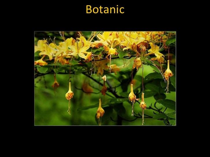 Botanic<br />