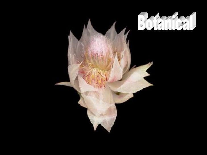Botanical (catherine)