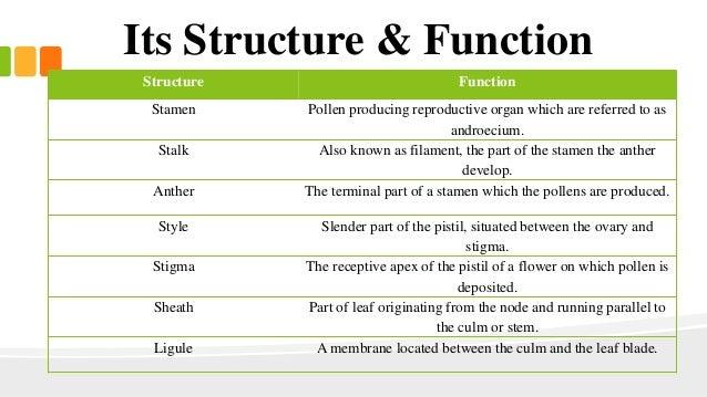 Image Gallery stigma function