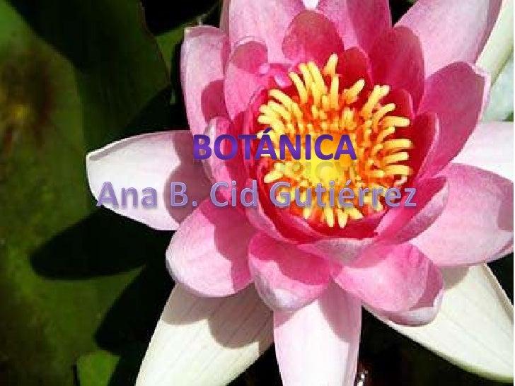 Botánica<br />Ana B. Cid Gutiérrez<br />botánica<br />Ana B. Cid Gutiérrez<br />