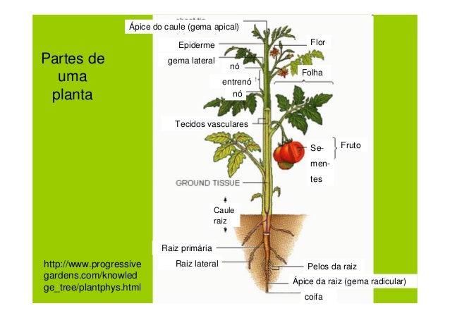 Botânica, morfologia e tipos de células e tecidos vegetais