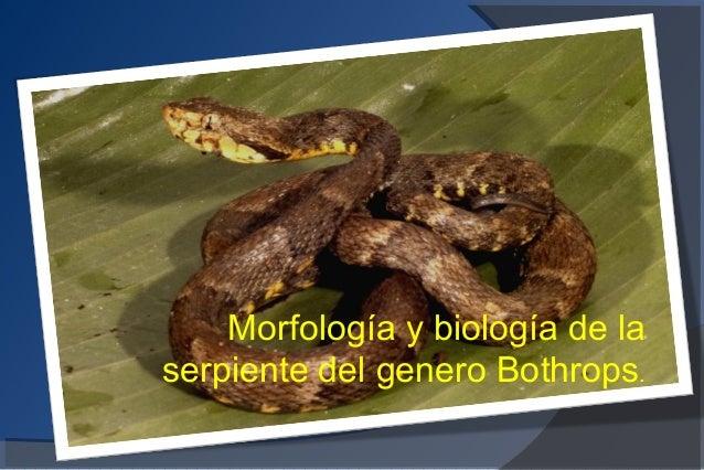 Morfologia y Biologia de las serpientes del Genero Bothrops
