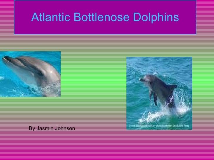 Atlantic Bottlenose Dolphins By Jasmin Johnson