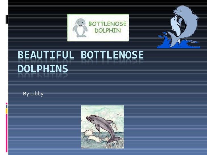 Bottlenose Dolphin   Libby