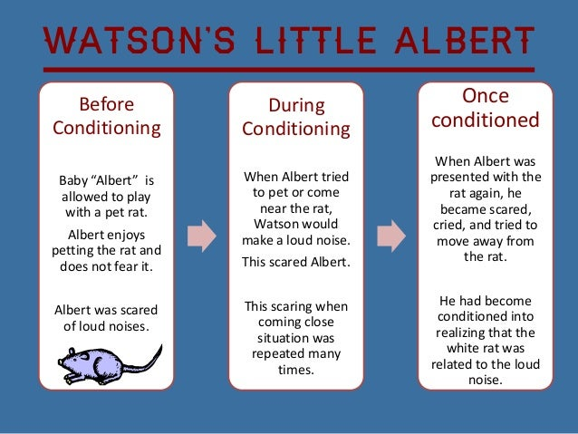 little albert essay