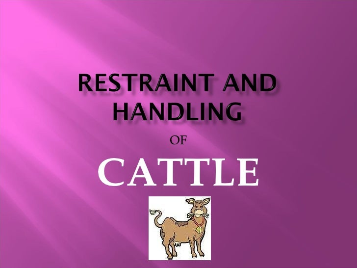 OF CATTLE