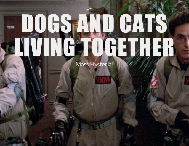 DOGS AND CATS LIVING TOGETHER Mass Hysteria!