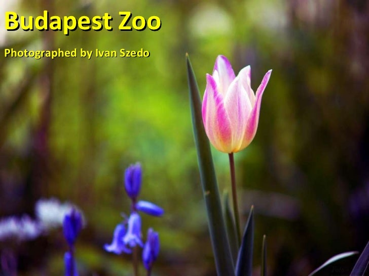 Budapest Zoo Photographed by Ivan Szedo