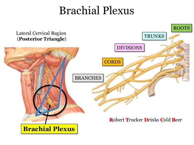 case study about cervical plexus