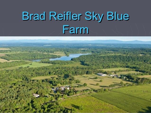 Brad reifler