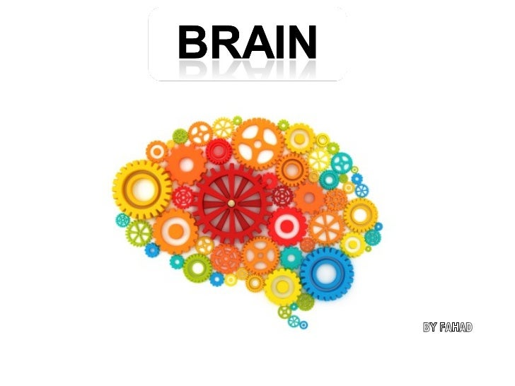 See What does your brain look like ?