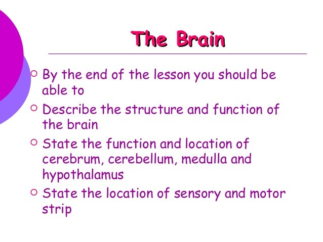 The BrainThe Brain  By the end of the lesson you should be able to  Describe the structure and function of the brain  S...