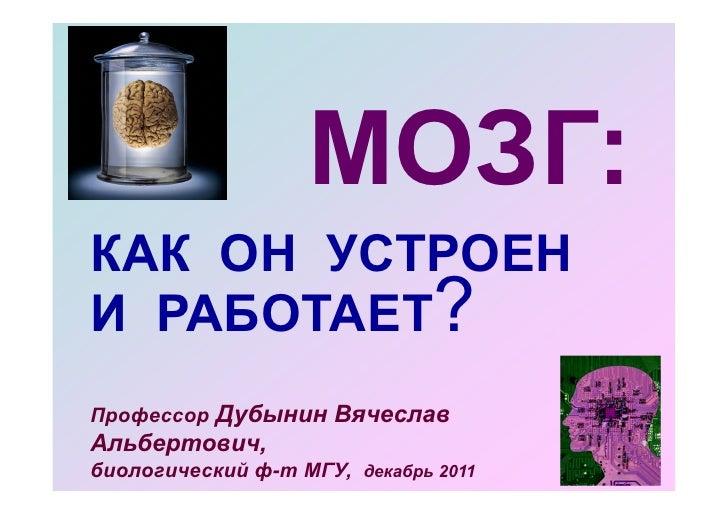 Brain present