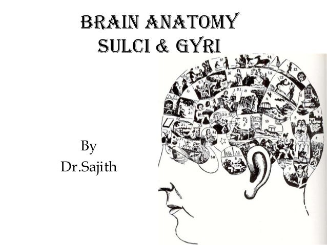 Anatomy of brain sulcus and gyrus - Dr.Sajith MD RD