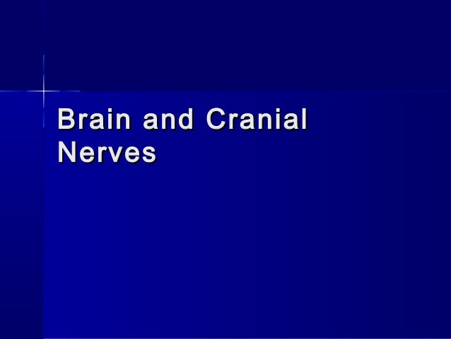 Brain and CranialBrain and Cranial NervesNerves