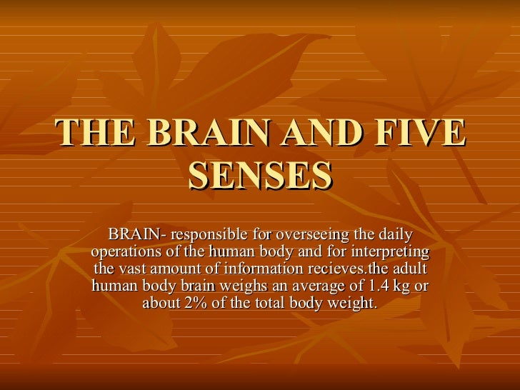 Brain And Five Senses