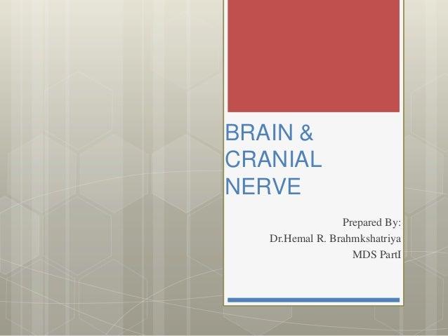 BRAIN & CRANIAL NERVE Prepared By: Dr.Hemal R. Brahmkshatriya MDS PartI