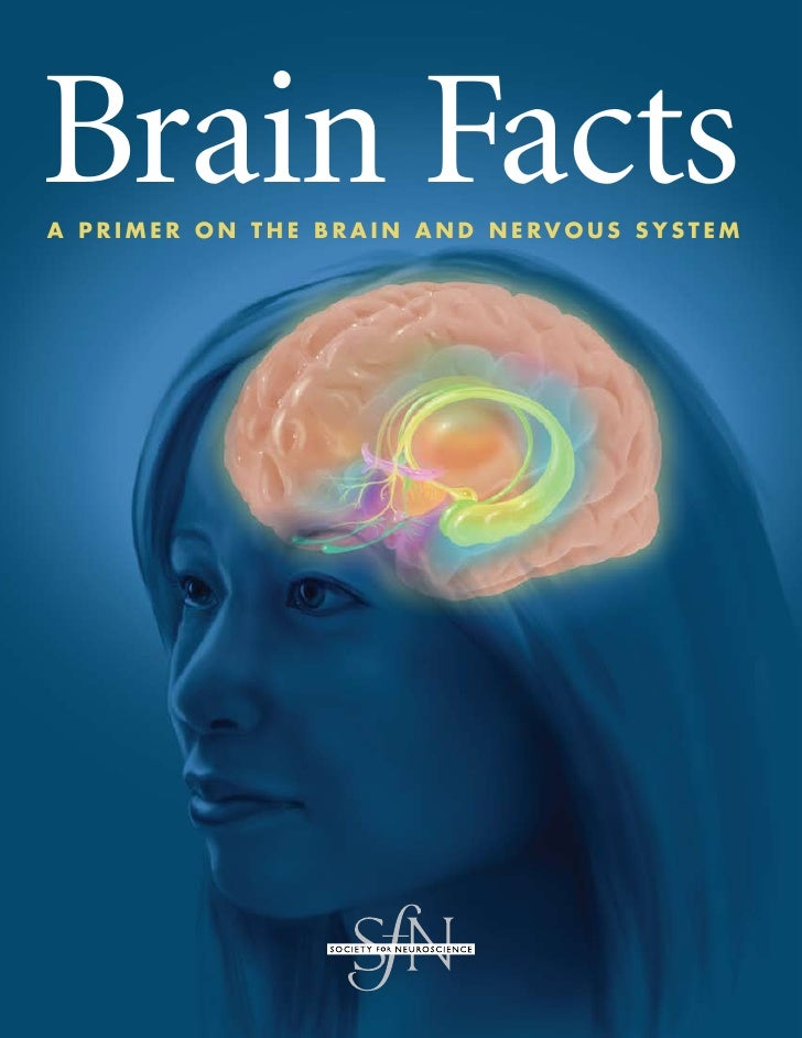 Brain Facts A Primer on the brAin And nervous system