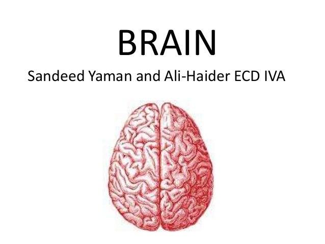 BRAIN Sandeed Yaman and Ali-Haider ECD IVA
