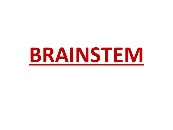Brainstem demo neww