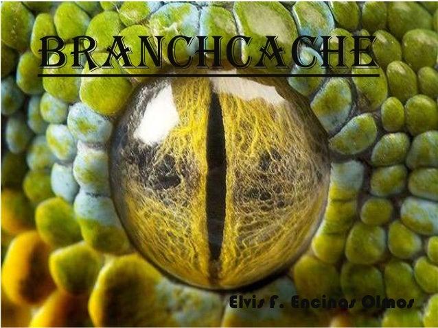 BranchCache  Elvis F. Encinas Olmos