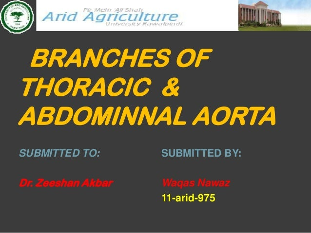 BRANCHES OFTHORACIC &ABDOMINNAL AORTASUBMITTED TO:       SUBMITTED BY:Dr. Zeeshan Akbar   Waqas Nawaz                    1...