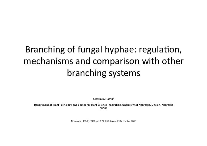 Branching of fungal hyphae