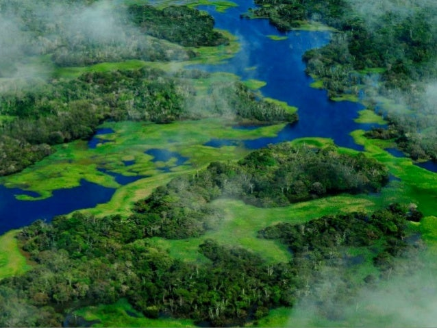 end Cast Brazilian Amazon images credit www. Music elton luz created olga.e. thanks for watching