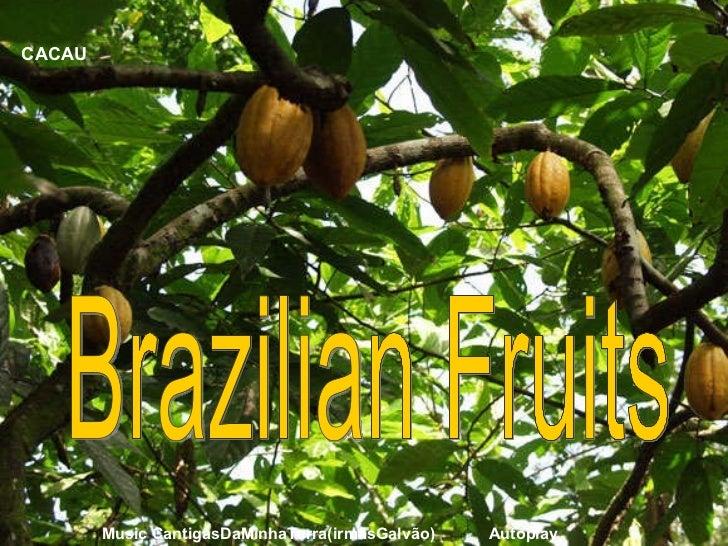 CACAU Brazilian Fruits Music CantigasDaMinhaTerra(irmãsGalvão)  Autoplay