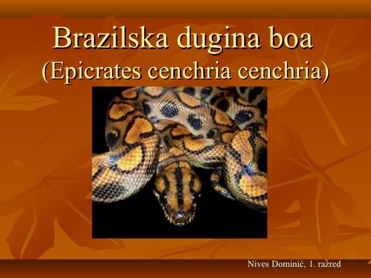 Brazilska dugina boa(Epicrates cenchria cenchria)                    Nives Dominić, 1. razred
