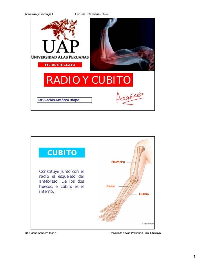 Anatomía y Fisiología I           Escuela Enfermería - Ciclo II                FILIAL CHICLAYO                 RADIO Y CUB...