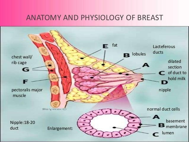 Breastfeeding 18 Weeks And No Baby Bump
