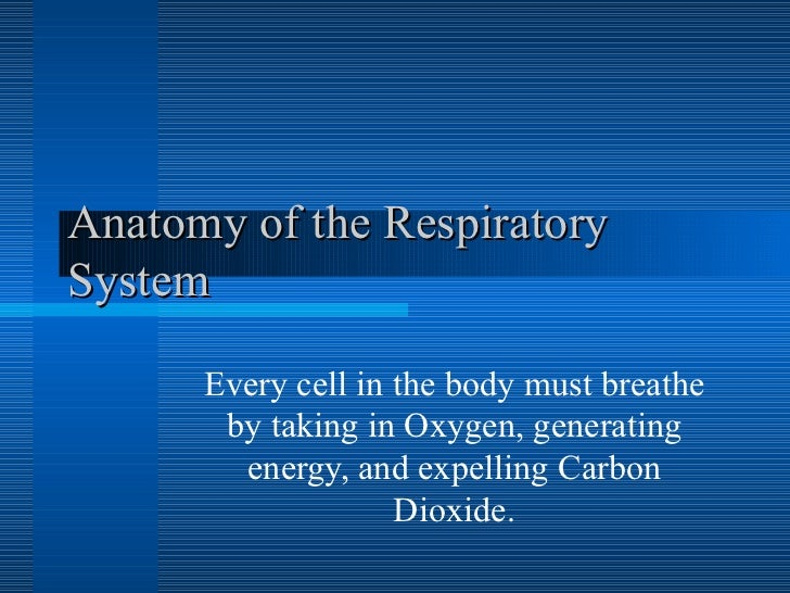 Anatomy of the Respiratory System Every cell in the body must breathe by taking in Oxygen, generating energy, and expellin...
