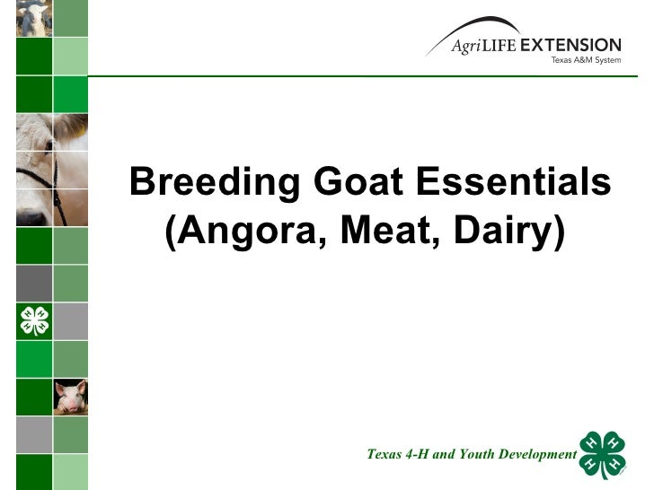 Breeding Goat Essentials (Angora, Meat, Dairy)  Texas 4-H and Youth Development