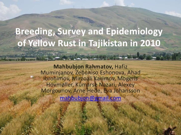 Breeding, Survey and Epidemiology of Yellow Rust in Tajikistan in 2010