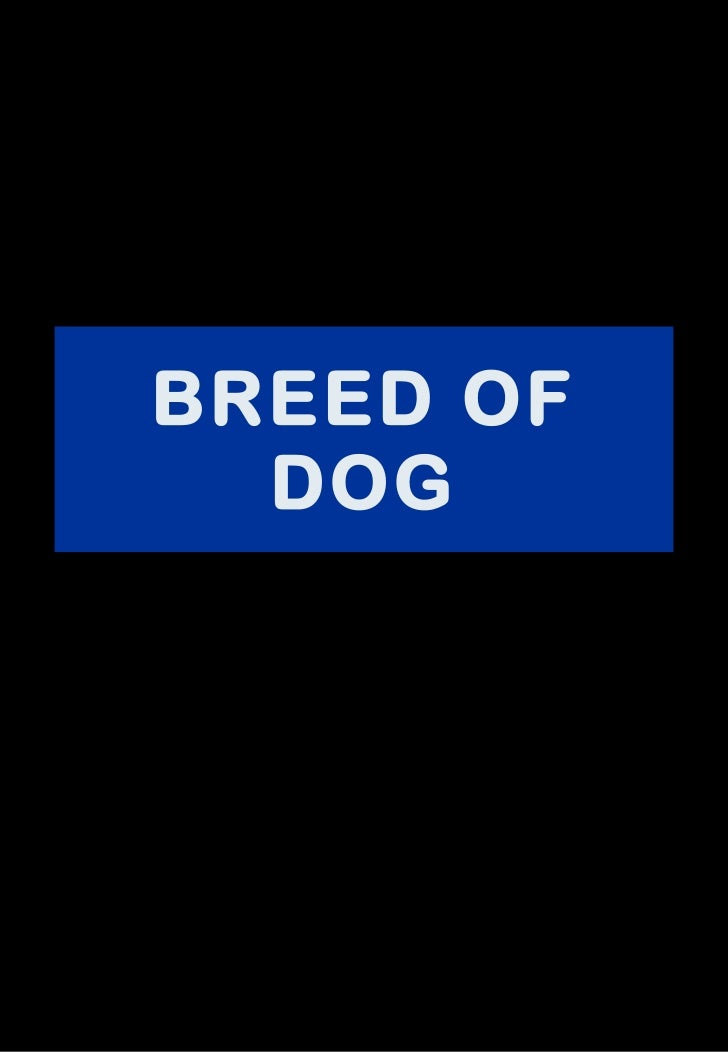 BREED OF DOG