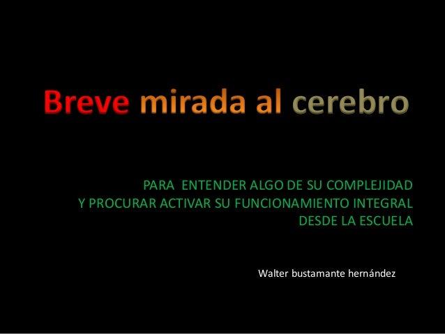 Breve cerebro PARA ENTENDER ALGO DE SU COMPLEJIDAD Y PROCURAR ACTIVAR SU FUNCIONAMIENTO INTEGRAL DESDE LA ESCUELA Walter b...